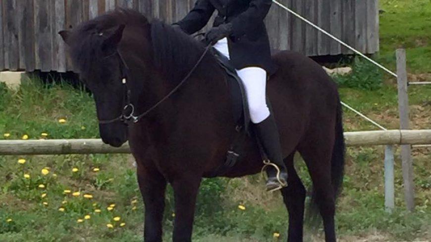 Unsere Verkaufspferde erfolgreich beim Reitabzeichen!