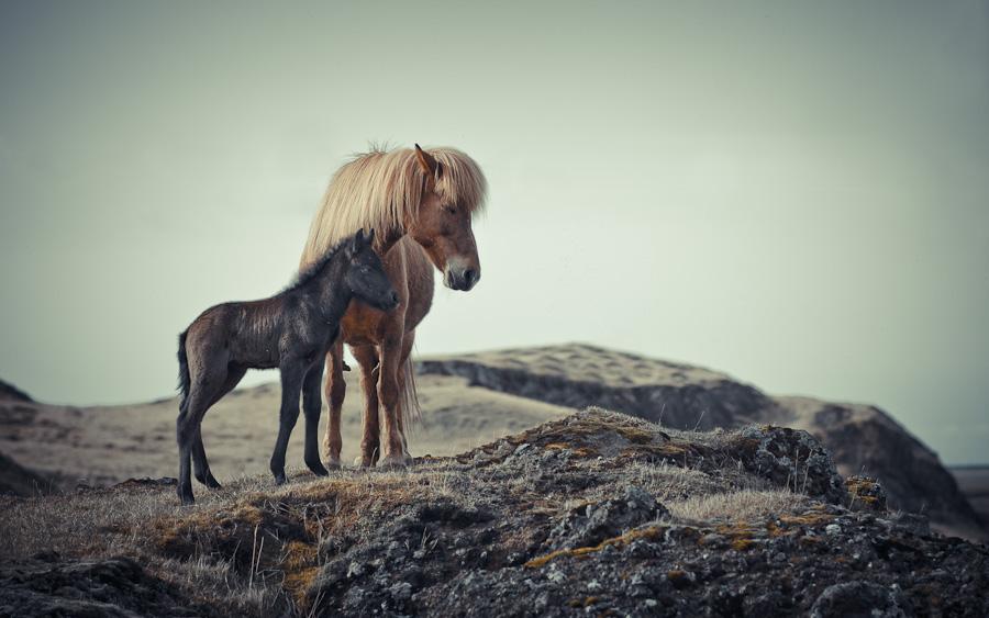 Isländer kennenlernen